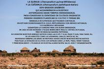 Quinua (Chenopodium quinoa Willdenow) y Cañahua (Chenopodium pallidicaule Aellen)