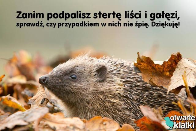 https://www.facebook.com/otwarteklatki