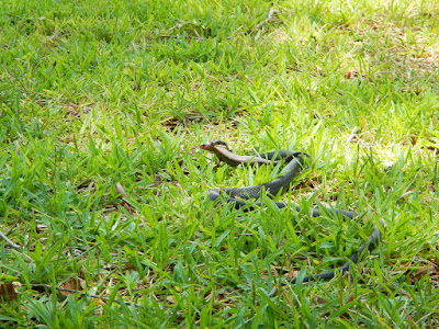 Snake and Skink
