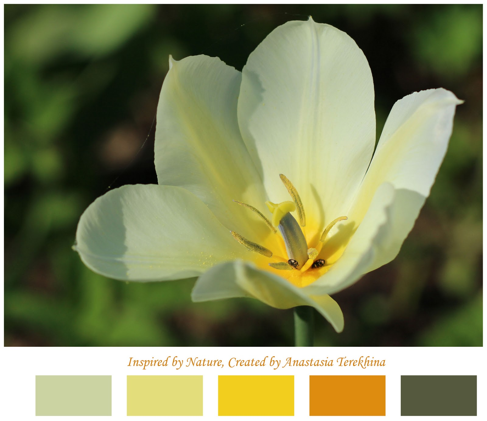color inspiration palette tulip