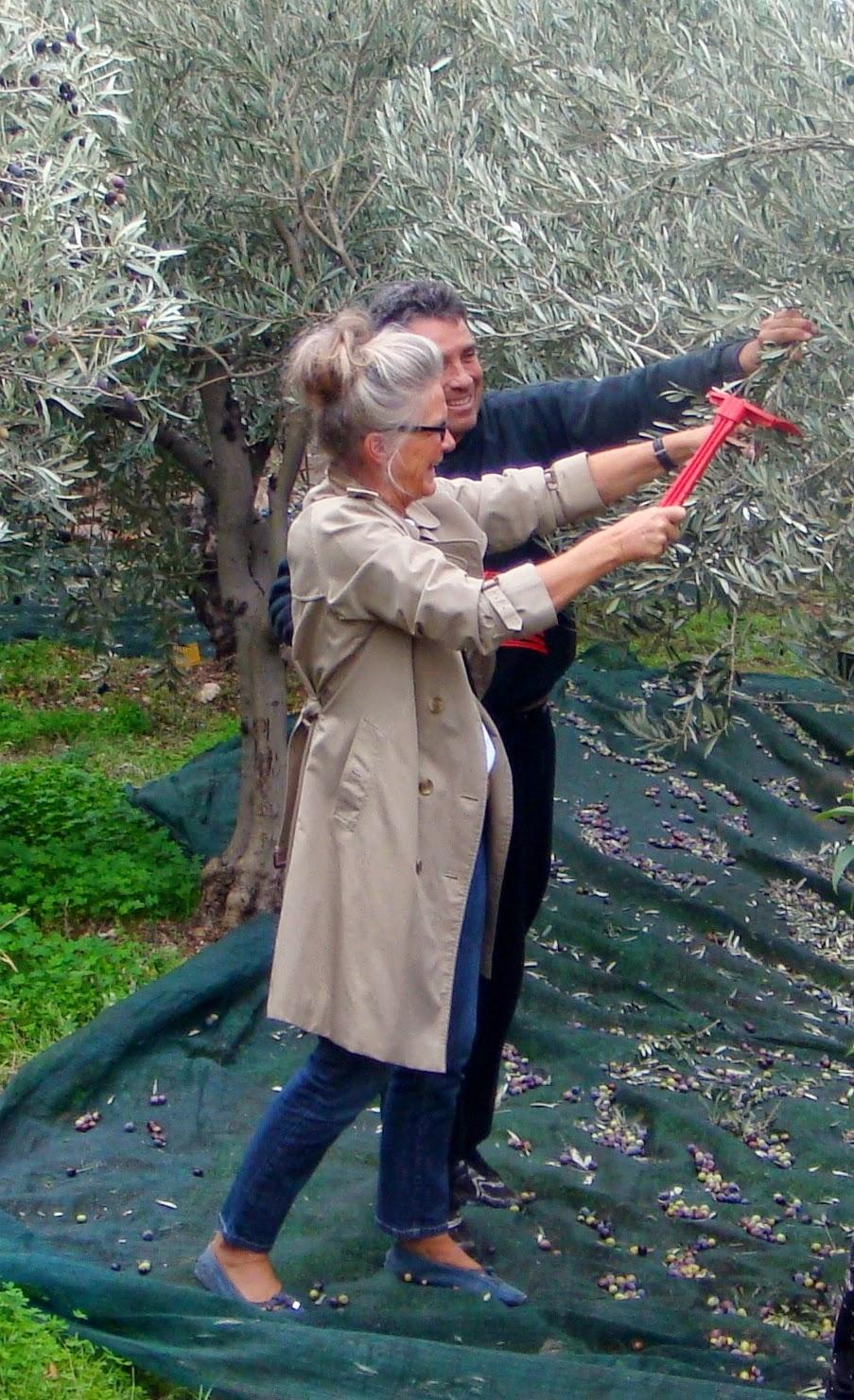 Me...Olive picking!