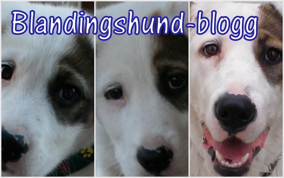 BLANDINGSHUND-BLOGG