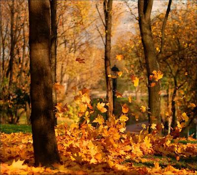 caida de la hoja Fotografias de otoño