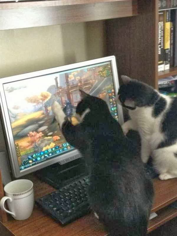Funny cats - part 79 (35 pics + 10 gifs), cats watch video game on computer