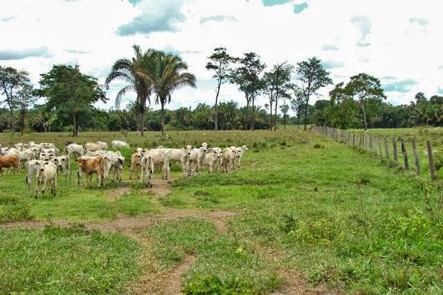 Terras de cultura no Tocantins