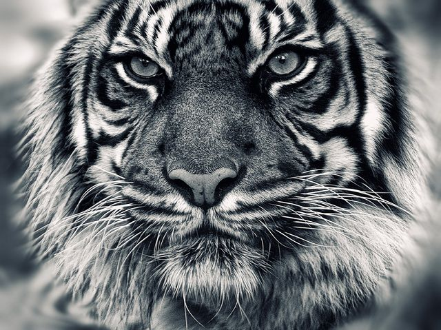 The Most amazing Animal closeup Photography