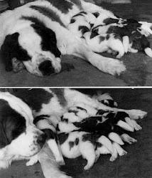 ¡Feliz día del animal!