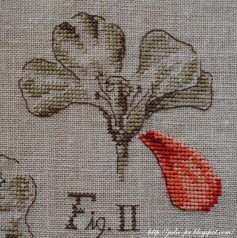 Étude au Géranium, Véronique Enginger, ботаника вероник анжанжер, ботанический этюд герань, парижские вышивальщицы, вышивка крестом, французская вышивка