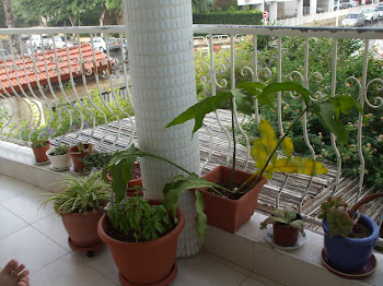 Cactus Garden Gets Rain