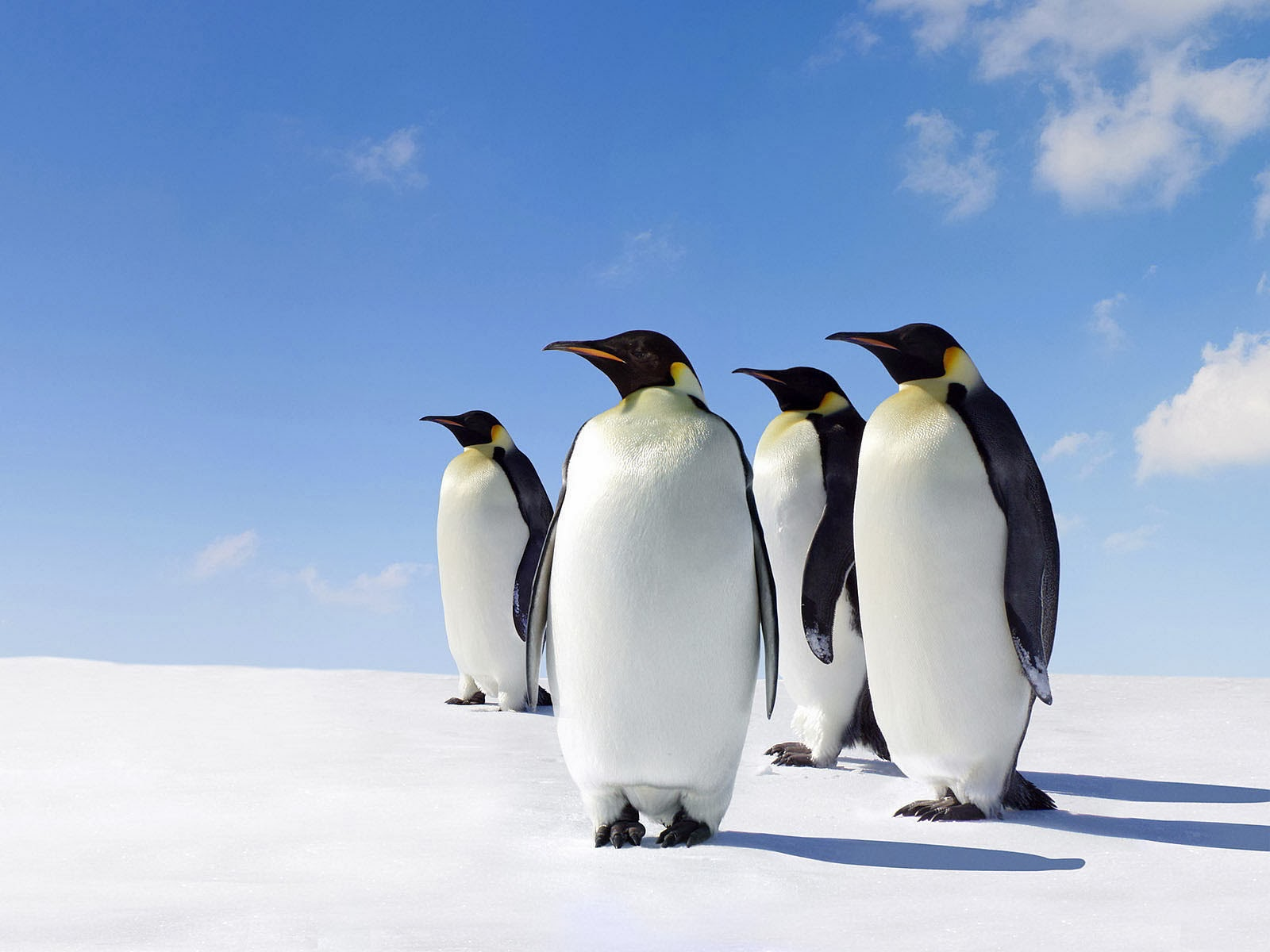 penguin wallpaper wallpapers - photo #33