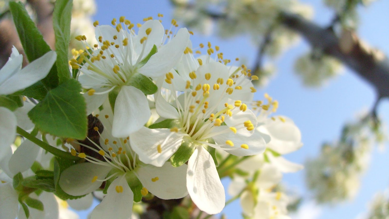 http://3.bp.blogspot.com/-Bl47kX0smd4/T9GV_tfODVI/AAAAAAAAD-k/pg-ICE-6bxk/s1600/Bloom+Flower+Wallpaper+4.jpg