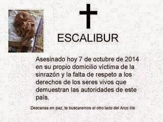 LOS QUE HAN TRAIDO EL ÉBOLA A ESPÑA, HAN ASESINADO A EXCALIBOR SIN NI SIQUIERA TESTARLO PRIMERO