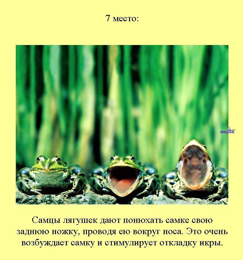 Рецептор Дистантный фото