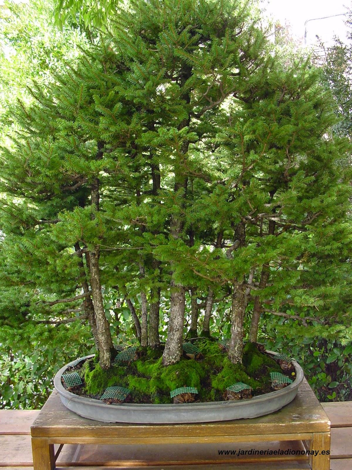 Jardineria eladio nonay bosque bons i jardiner a eladio - Jardineria eladio nonay ...