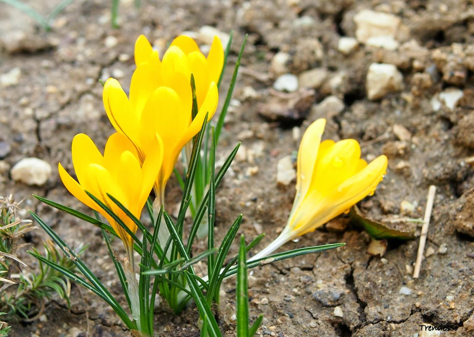 Spring is waiting already for us.... / Jar na nás už čaká.....