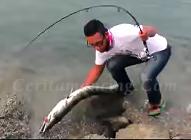 Gila Mancing Ikan Barracuda Monster Tak Berani Pegang