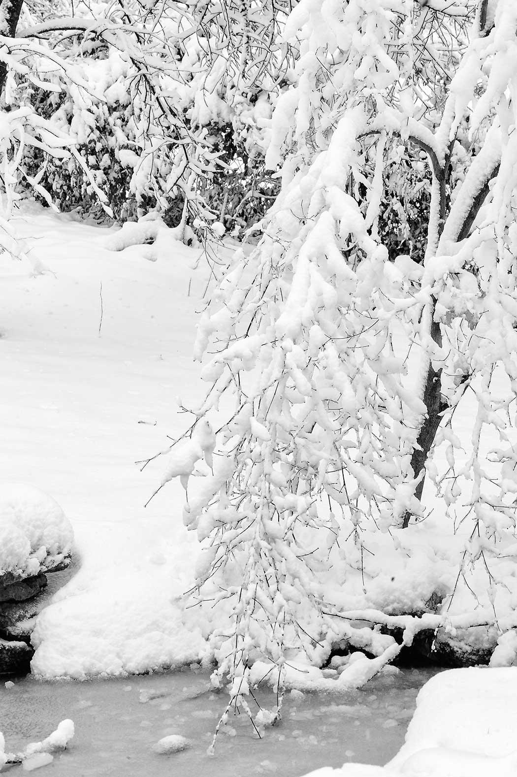 hyperblogal backyard snow