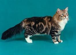 Zwierzaki Koty