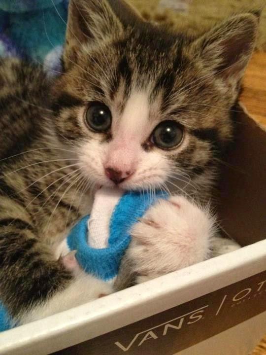 Cara Merawat Anak Kucing