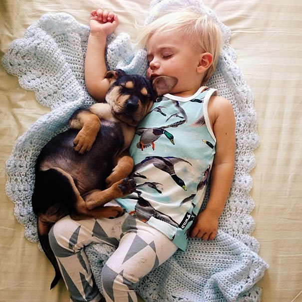 dog and toddler napping together