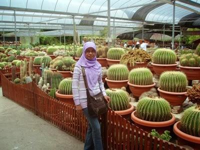 a-cactus+point-5.jpg
