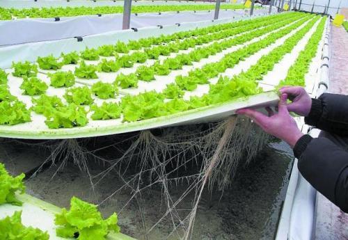 Cultivos hidrop nicos tipos de cultivos hidrop nicos - Jardin hidroponico ...