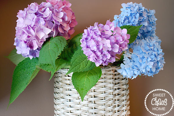 square gl vases for centerpieces with Pictures Of Hydrangeas In Vases on 23737 Mirror Tiles For Centerpieces besides 14R8B5s d8s15z8o4 also Britts Wedding furthermore Vintage Glass Bottle likewise 569775790331727622.
