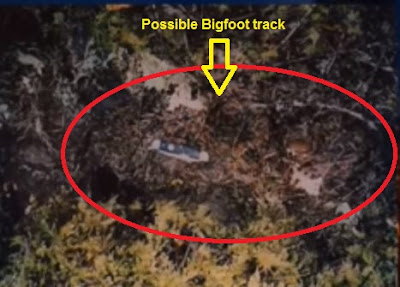 Thomas Powell Bigfoot