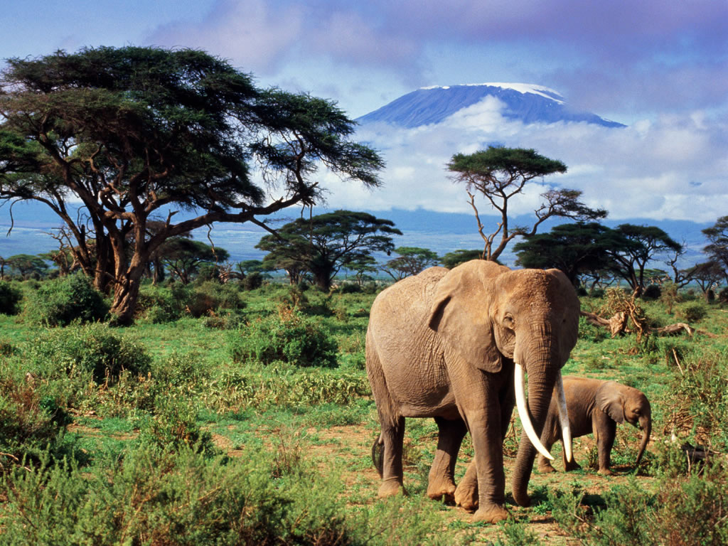animal free wallpapers animal elephant free wallpapers