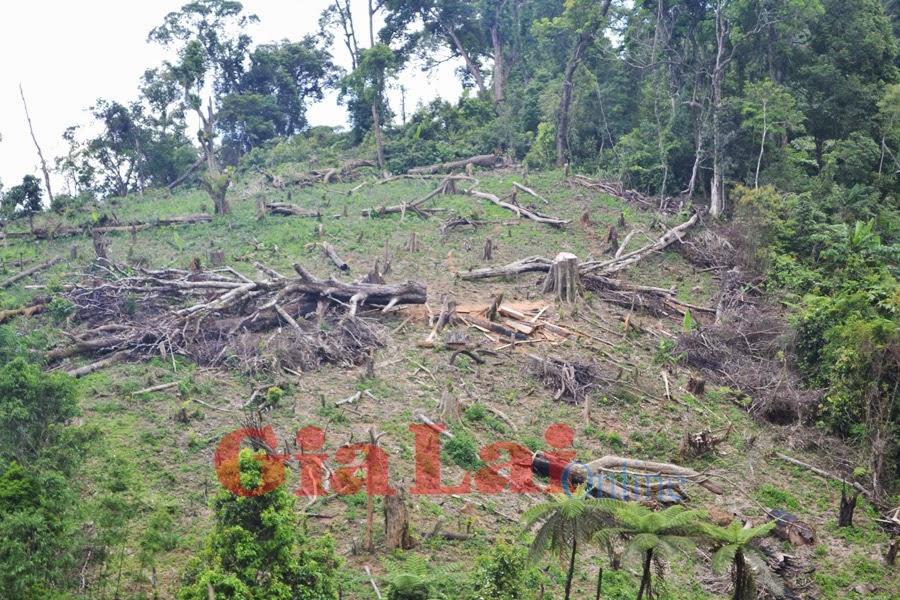 Gia Lai: Hơn 100 m3 gỗ vắng chủ được phát hiện trong rừng phòng hộ