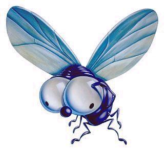 7 caracteristicas de las moscas