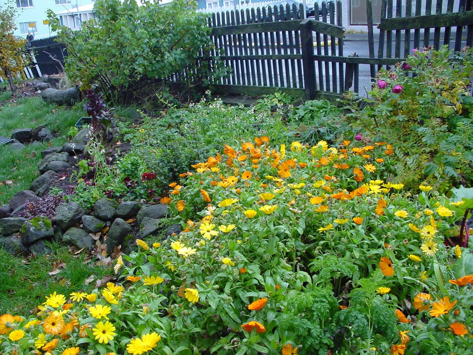 Jardineria eladio nonay jardiner a eladio nonay jardines - Jardineria eladio nonay ...