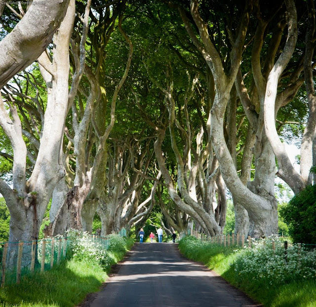 14. A family stroll amongst NI's famous Dark Hedges by Neil Bryars