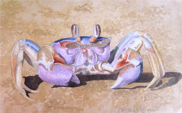 watercolour crab