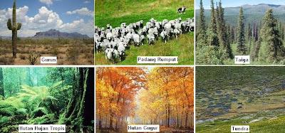 Macam bioma ekosistem darat