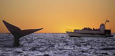 Glattwalen Whale Watching in Halbinsel Valdés Puerto Pirámides