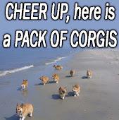 Corgis!!