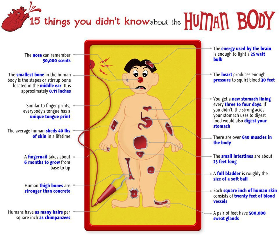 15 things you didn't know about human body | health and fitness blog, Cephalic Vein