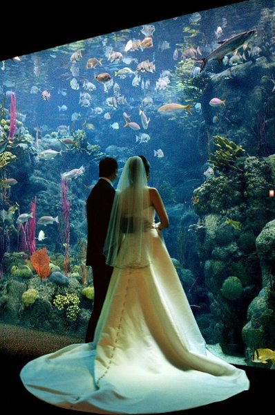 The Luxe Bride Blog Something Different For Your Wedding