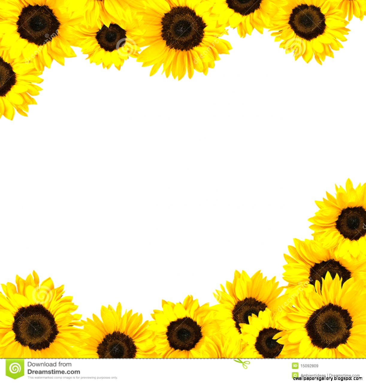 Sunflowers Clipart Border Sunflower Border Isolated On   Clipart Kid