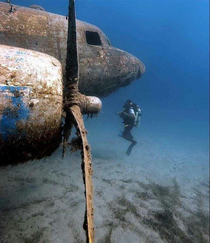transplantasi karang metode underwater sculpture