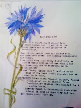 Cornflower....brighter