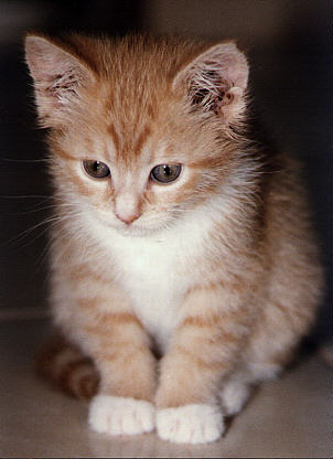 ... , Nabi Muhammad SAW memiliki seekor kucing yang dib