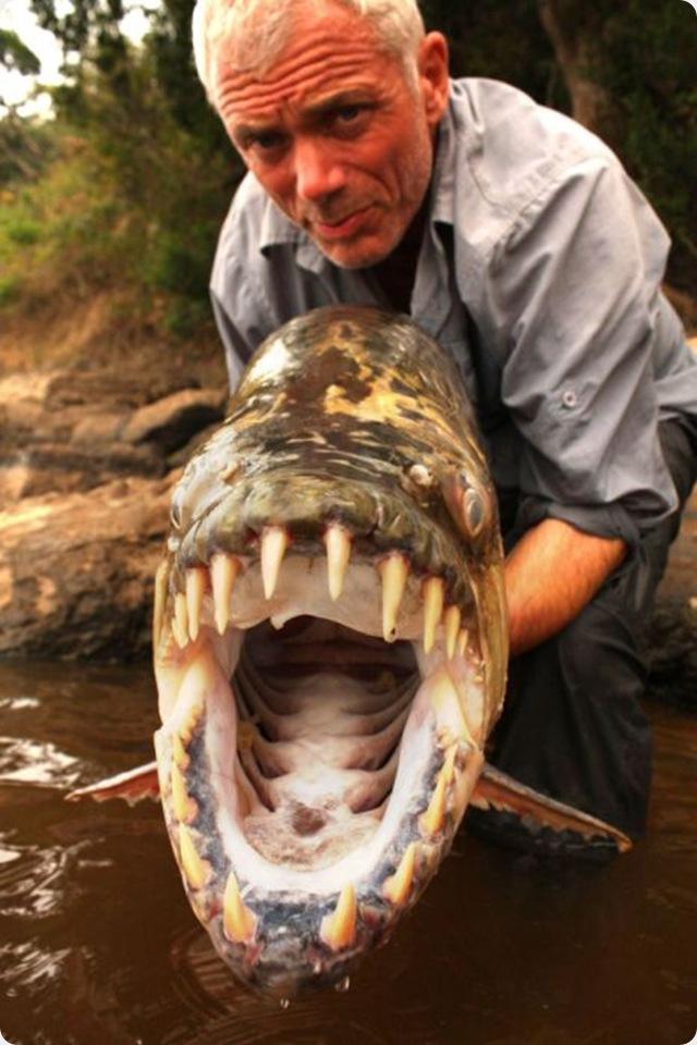 imagenes del animal mas peligroso del mundo - Los 10 animales mas peligrosos del mundo Cliker