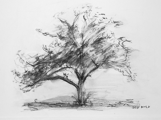 Rmwillustration tree drawing in black chalk for Beautiful drawings of trees