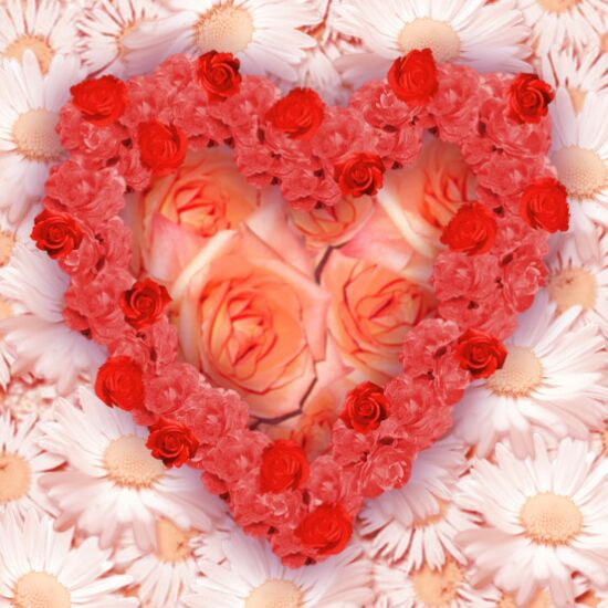 Flowers For Flower Lovers.: Love Flowers Wallpapers