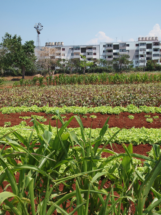 Grow City Havana Urban Agriculture Infrastructure For