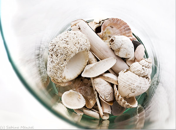 Psynopsis MyFavouriteThings White Shells