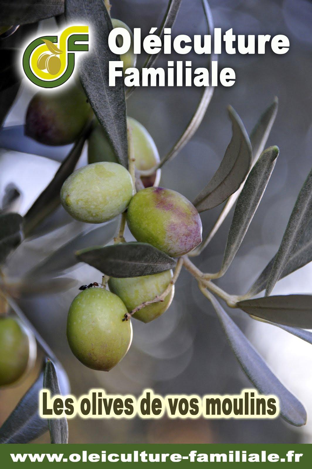 Mes olives comptent pour les moulins !
