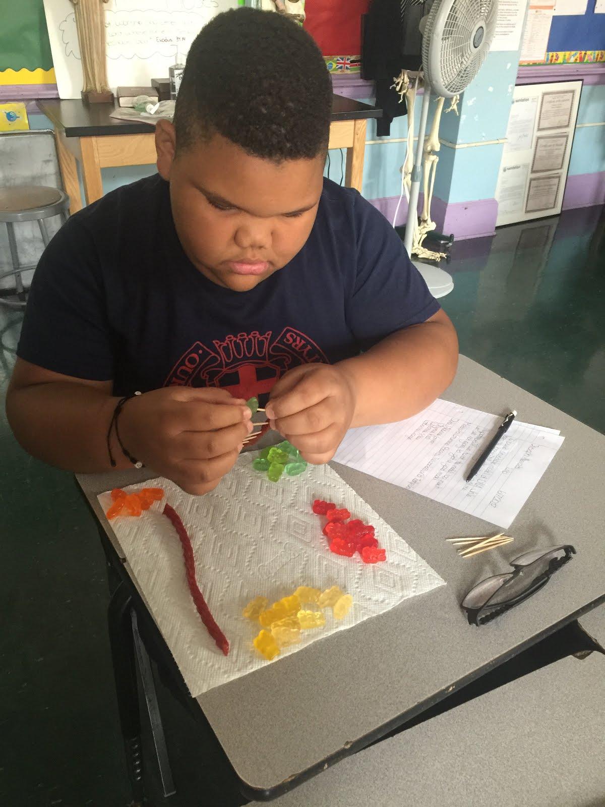 Building DNA models